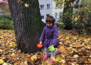 Podzimní úklid listí.